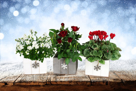 4in Blooming Mix, Wood Box,Snowflake hanging x.jpg