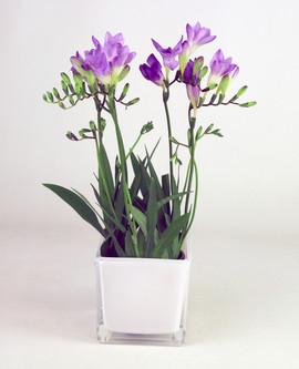 4in Freesia purple glass cube.jpg