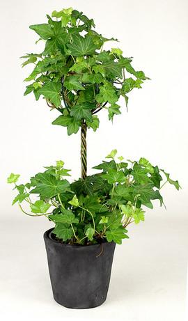 4in Ivy Topiary-Black Pot.jpg