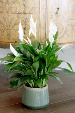 Foliage Spath ceramic.jpg
