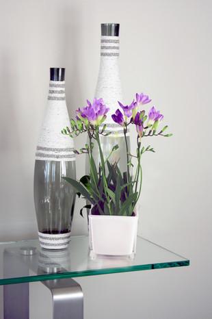 Bromeliad candidx.jpg