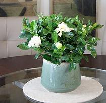 Gardenia ceramic.jpg
