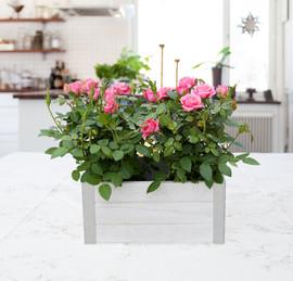 DBL wood box Mini Rose.jpg