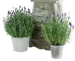 4in - 6in Lavender , Tin-2.jpg