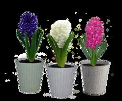 4in Hyacinth-SeasideTin-3.png