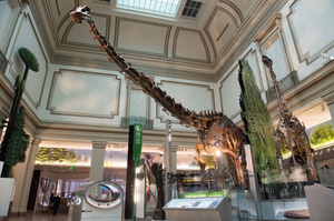 a dinsosaur skeleton