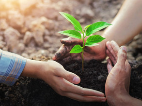 Potting a Plant or Planting a Tree means a lot