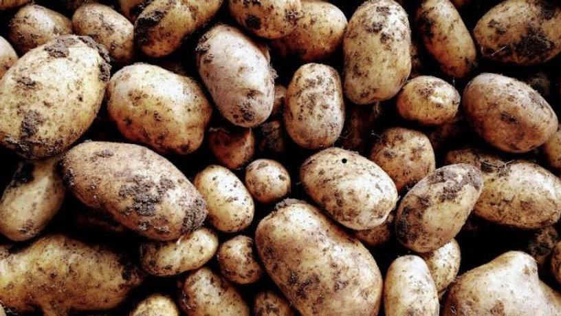 Maris Piper Potatoes (per Kg)