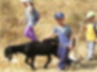 Goat herding for kids in Israel