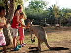 Kangaroo Farm in Israel