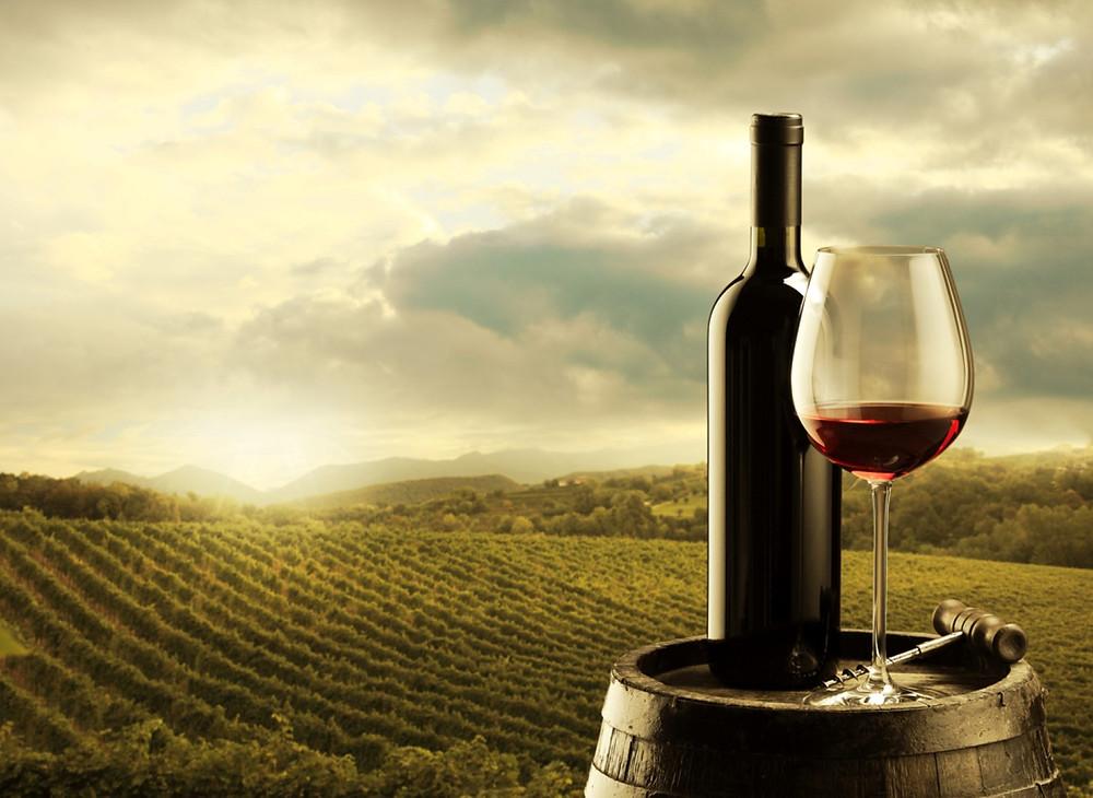 Israeli wine and vinyard