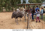 Ostrich Farm in Israel