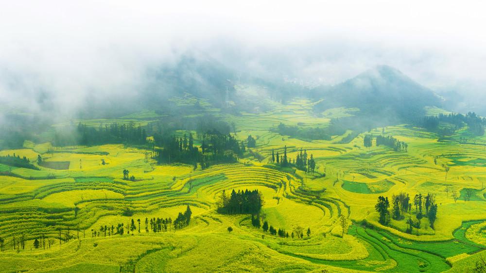 Champs de Colza jaunes en Chine