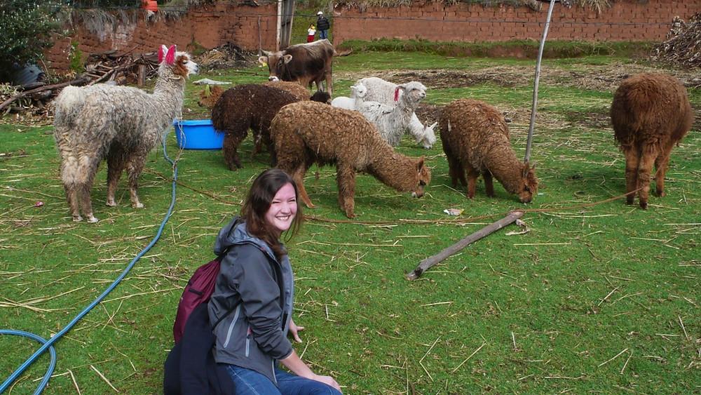ferme Chinchero au Pérou