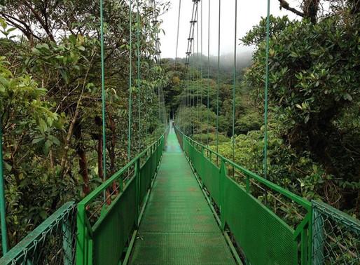 La canopée de la forêt de nuages, Monte Verde au Costa Rica