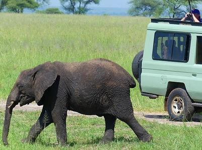 Parc Tarangire Voyage Tanzanie