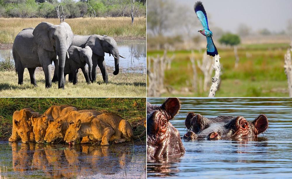 Safari Okavango Moremi