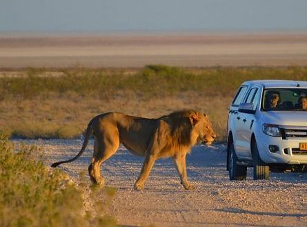 Parc Etosha Namibie Safari