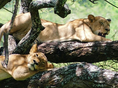 Parc manyara Voyage Tanzanie