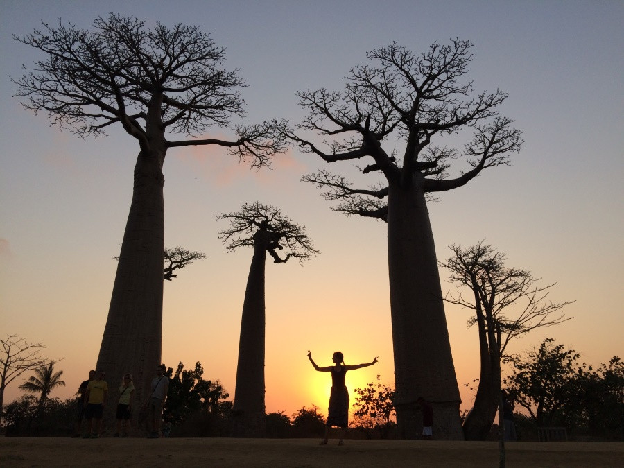 baobabs globe trotting