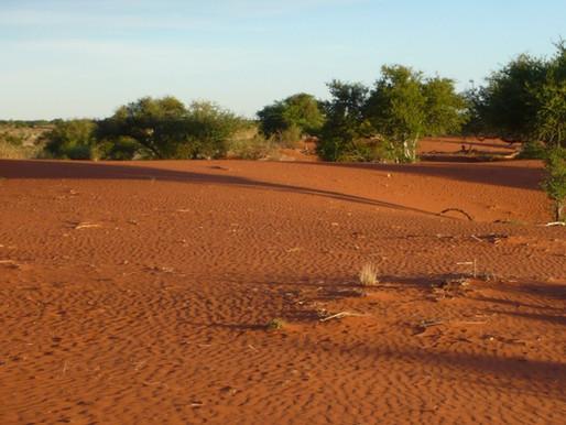 Le désert du Kalahari à Mariental en Namibie