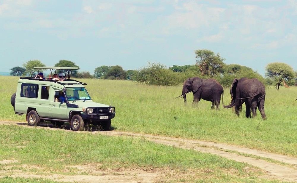 Safari 8 jours T