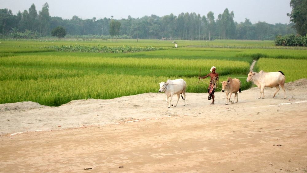 paysages Train Bangladesh Dhaka Srimangal