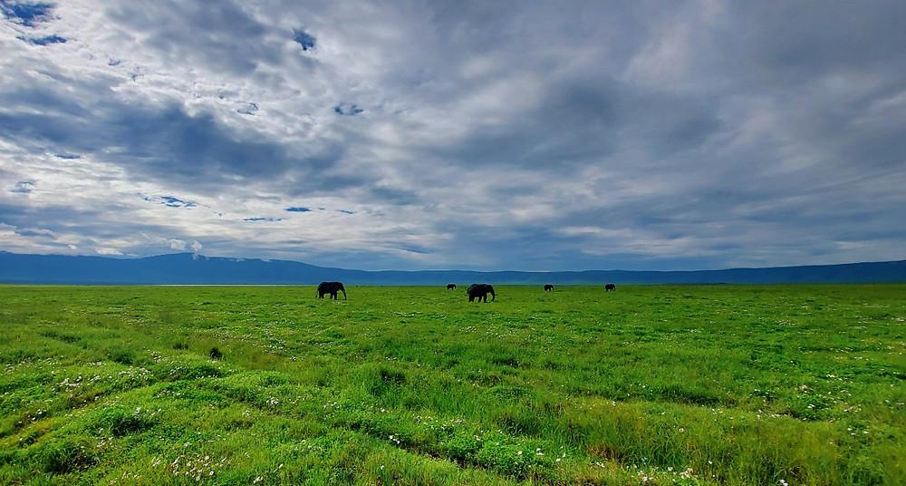cratère du Ngorongoro elephants