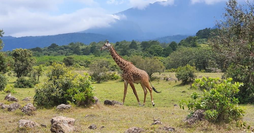 safari arusha national parc
