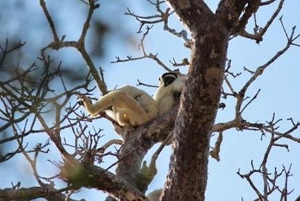 Madagascar voyage 10.jpg
