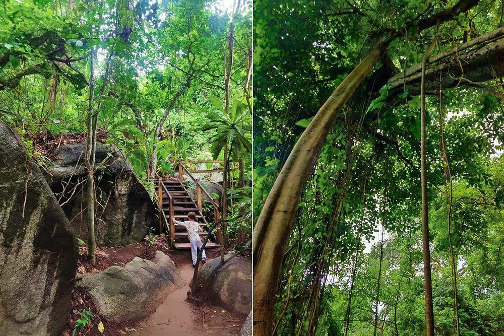 forêt tayriona