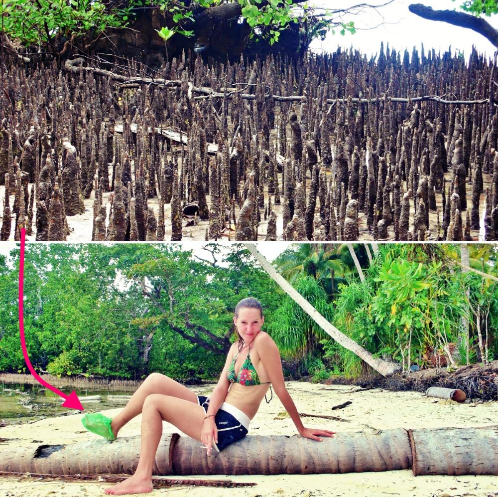 mangrove danger Raja Ampat