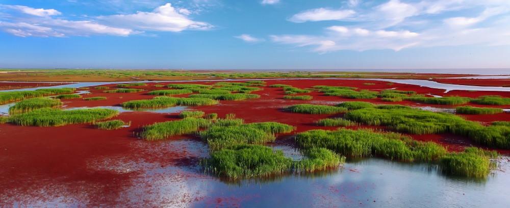 visiter plage rouge de panjin en chine