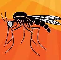 femme enceinte voyage moustiques.jpg