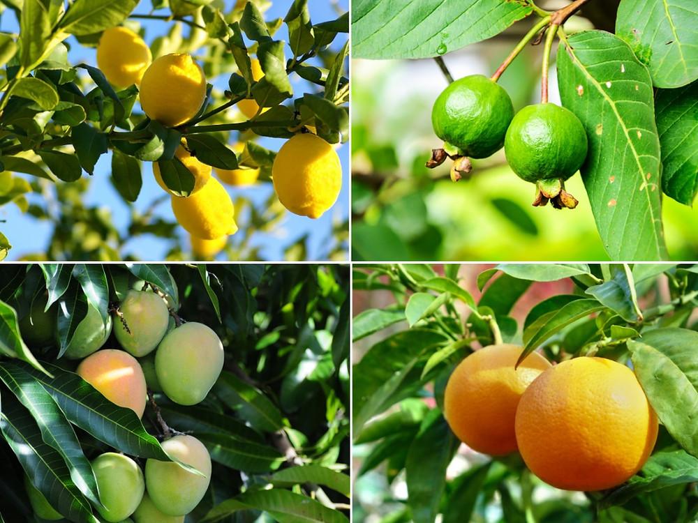 fruits pica