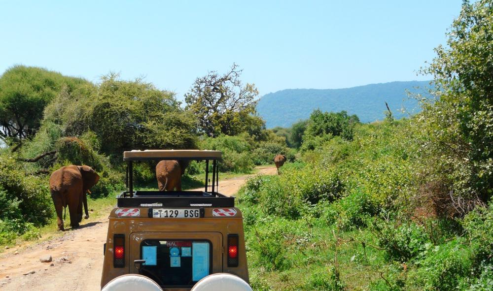 safari au parc du lac Manyara
