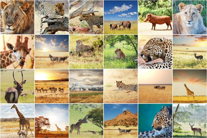 etosha namibie animaux