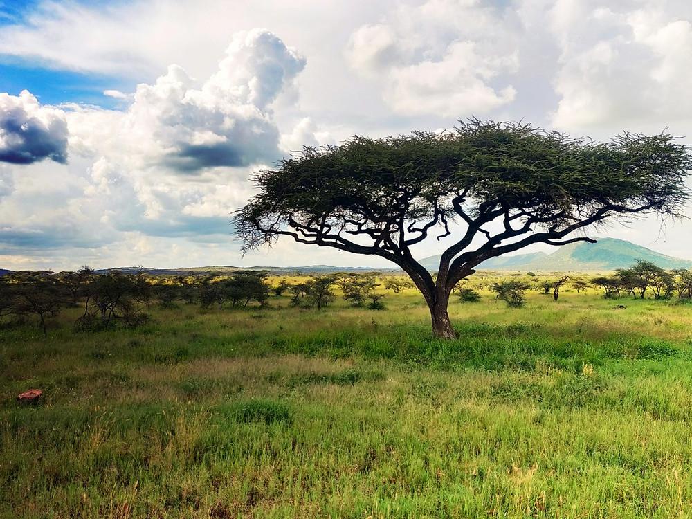 paysage parc national du Serengeti