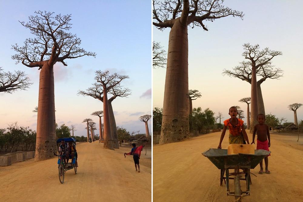 brouette allée des baobabs Madagascar