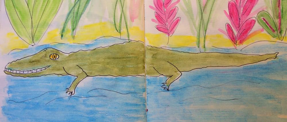 crocodile madagascar tsiribihina