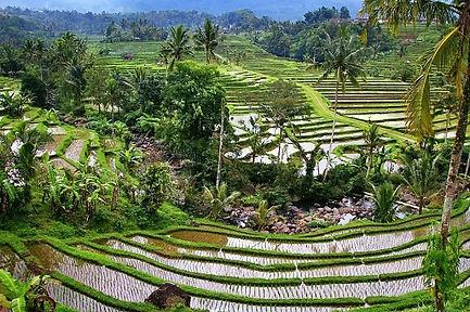 Bali Jatiluwih.jpg