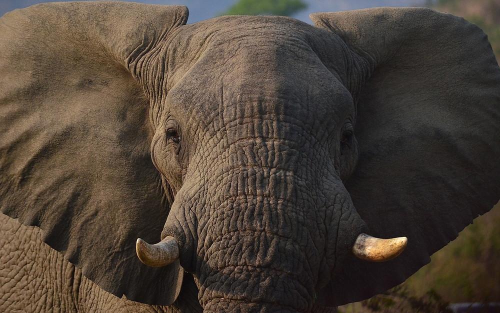 elephants Harar