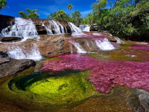 Le Caño Cristales, la rivière aux cinq couleurs en Colombie