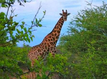 Ghanzi Botswana.jpg