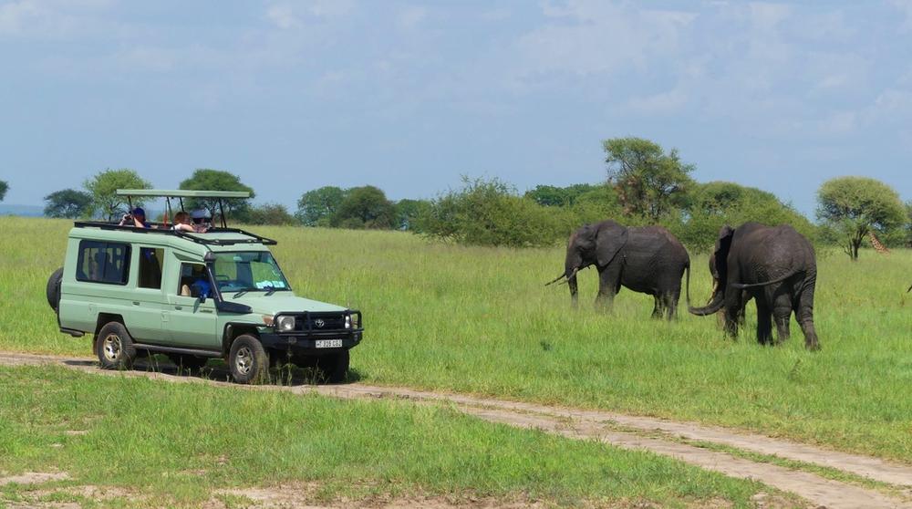 parc de Tarangire en Tanzanie