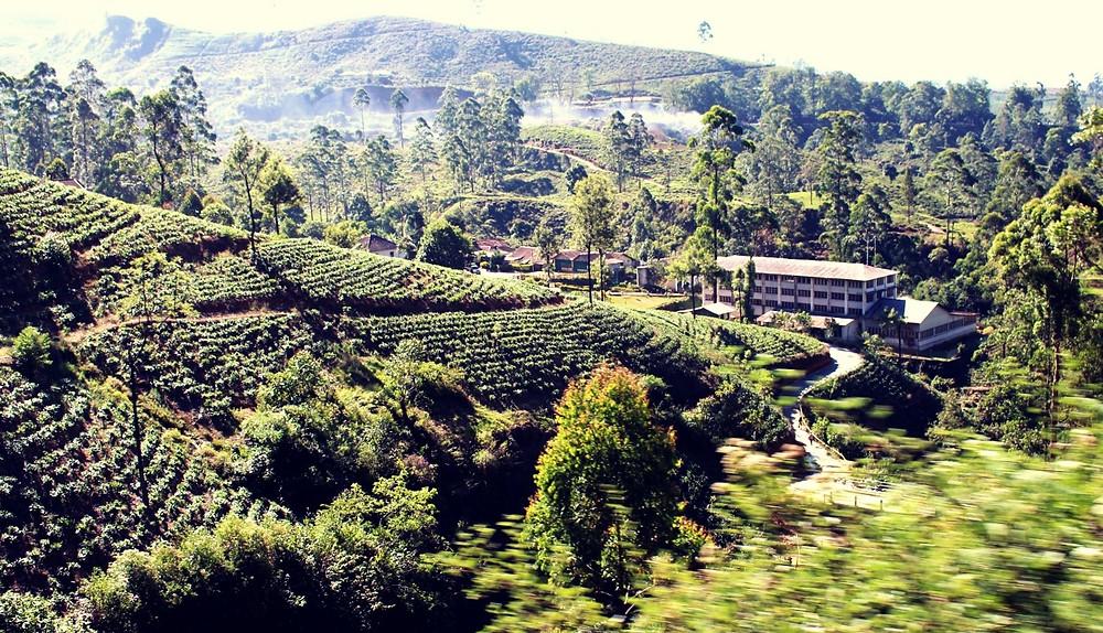 Train kandy ella paysages rizières