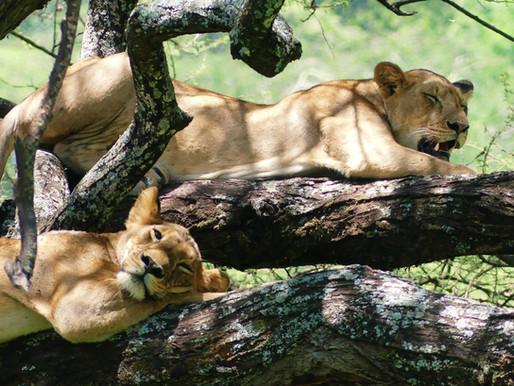 Le parc du lac Manyara en Tanzanie