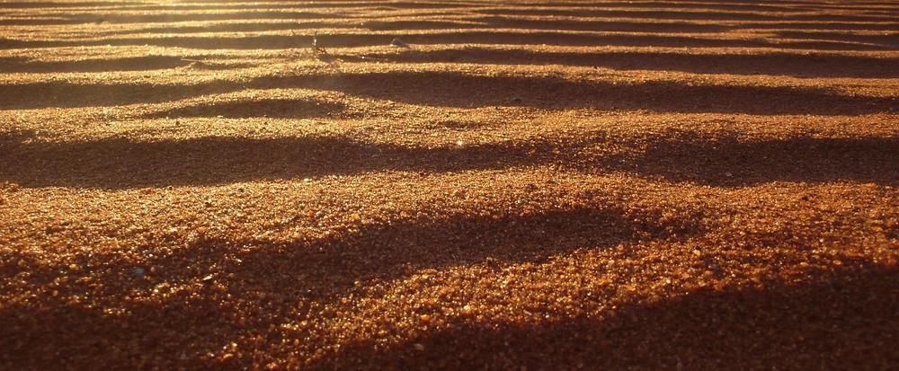 sable du désert de Kalahari
