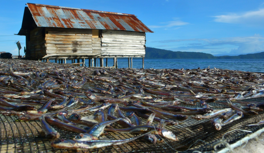 pêche Raja Ampat ile Gam