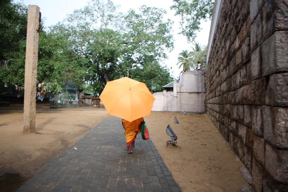 arbre sacré  Anuradhapura